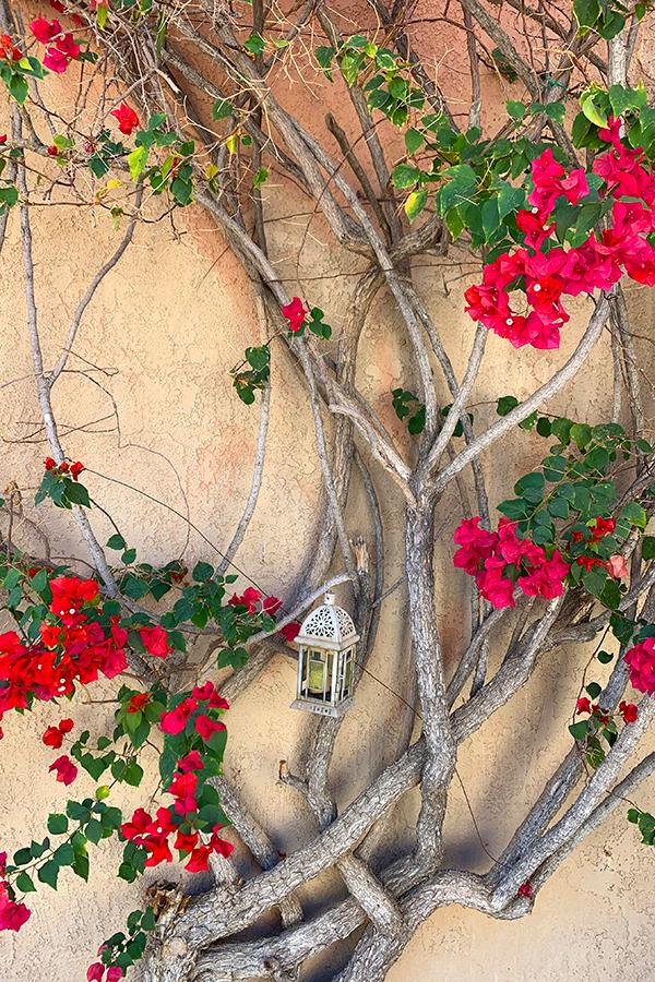 Courtyard Flowers, Native Desert Sun Golf House, Rams Hill